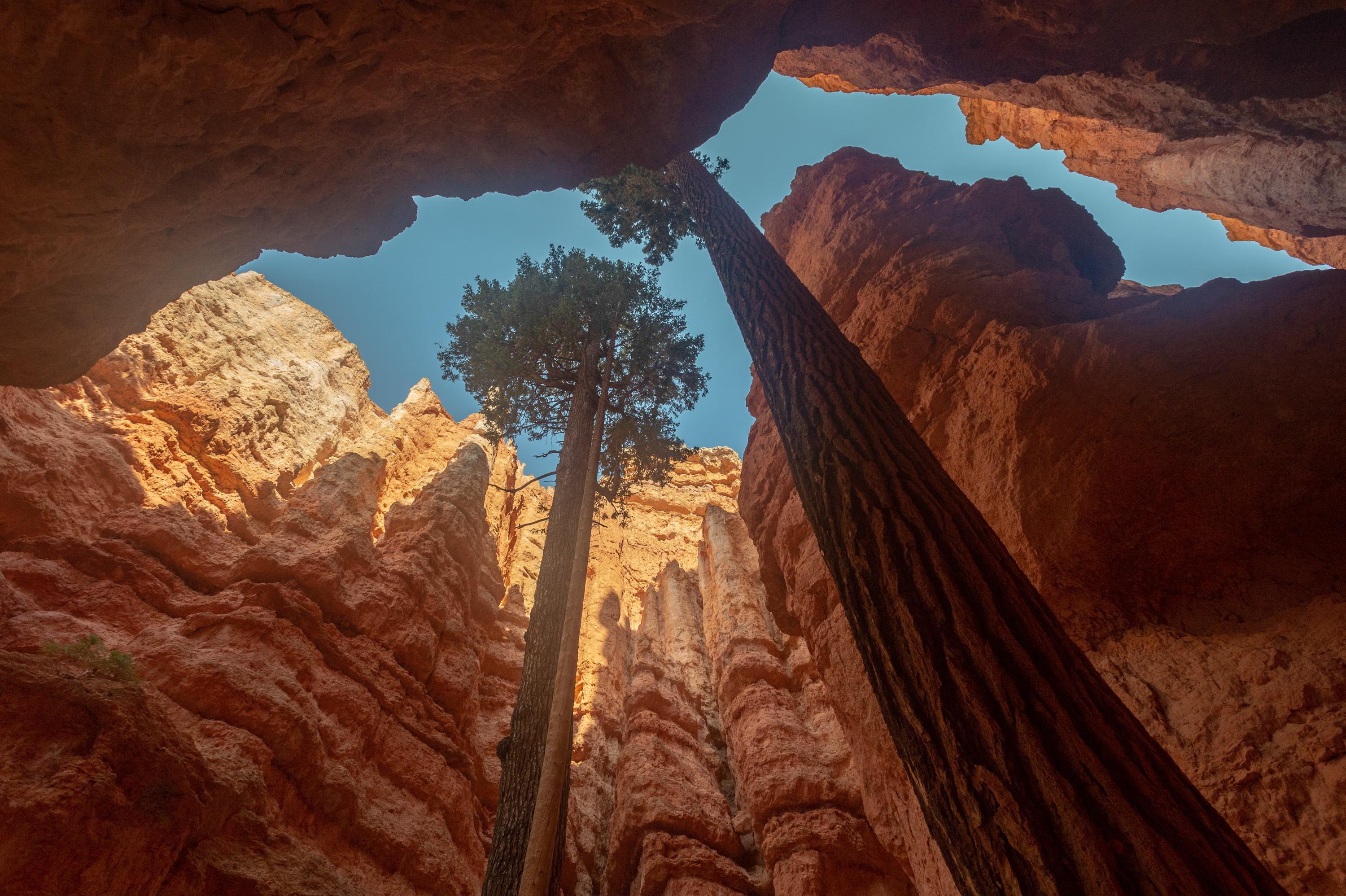 tall trees and hoodoos at Bryce Canyon National Park